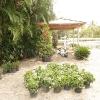 backyard_0112