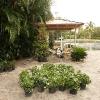 backyard_0113