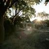 backyard_012