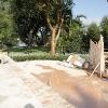 backyard_0120