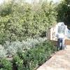 backyard_0121