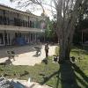 backyard_0136