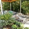 backyard_0145