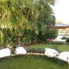 backyard_0164