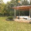 backyard_0193
