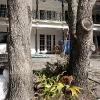 backyard_0241