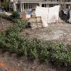 backyard_0242