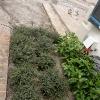 backyard_0248